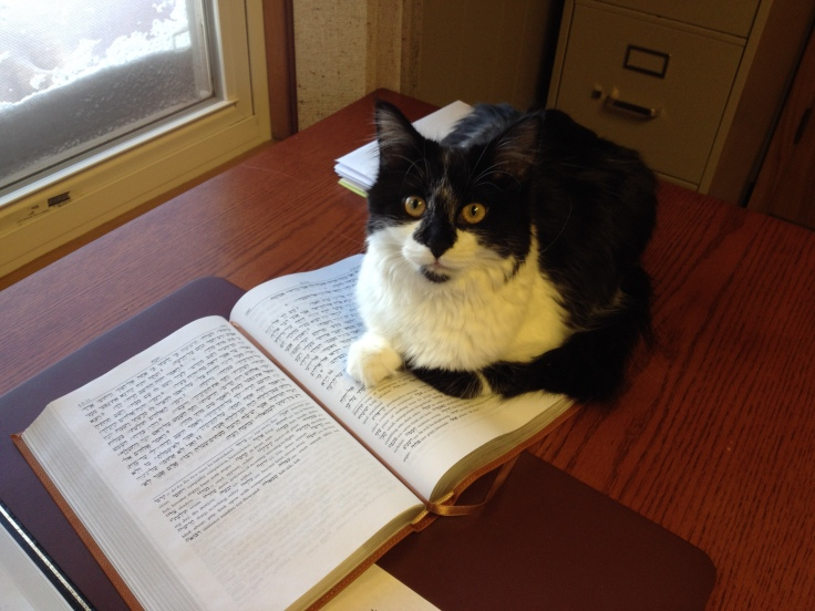 Our cat enjoys Hebrew - meditating on it day and night.