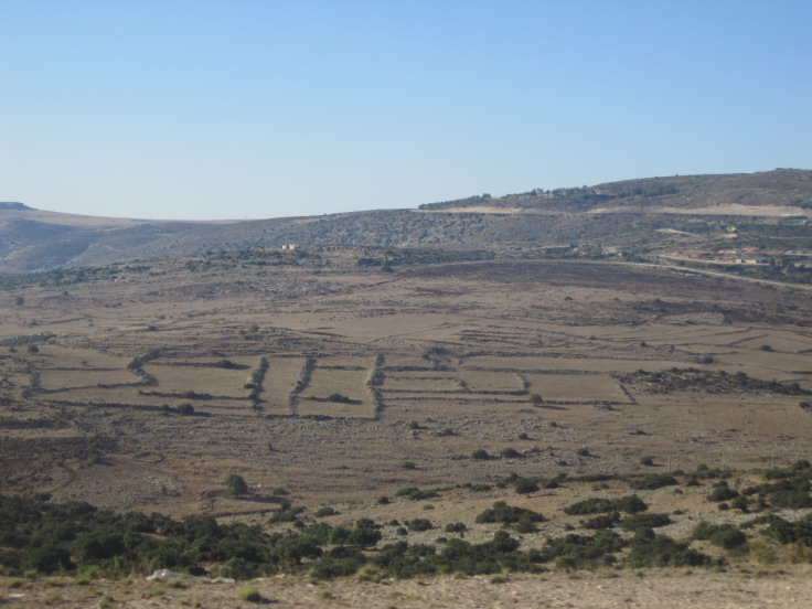 Ancient property boundary lines in Israel. Photo by Olga Shaffer